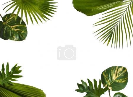 Disposition de nature créatrice fait de tropical laisse