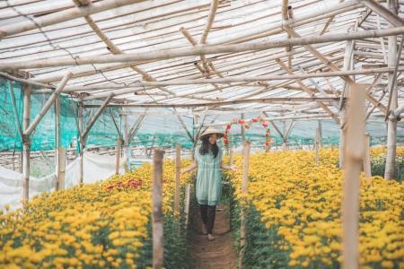 woman walking in between chamomile flower in the farm