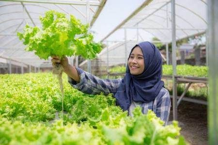 woman with lettuce standing in hydropohonic farm