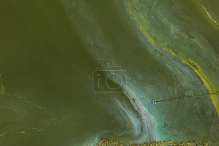 aerial view of the  green lake