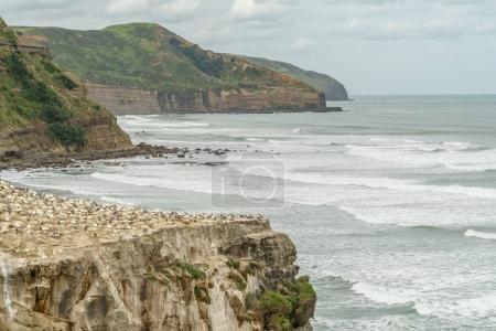 Photo pour Prise de vue spectaculaire de l'océan orageux et des falaises rocheuses, Muriwai plage, Nouvelle-Zélande - image libre de droit