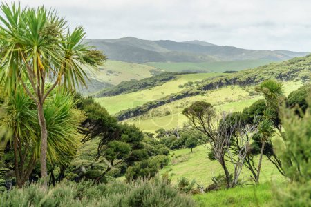 Photo for Scenic shot of valley with green hills, New Zealand - Royalty Free Image