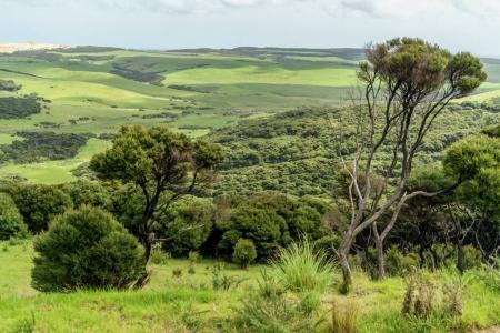 Foto de Hermoso valle verde en día nublado, Nueva Zelanda - Imagen libre de derechos