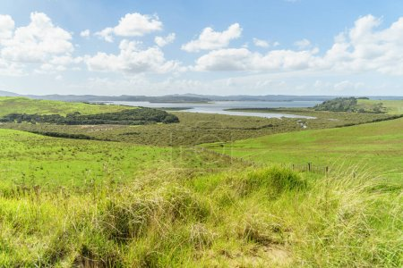 Photo for Scenic sho of beautiful green field with ocean on background on sunny day, Spirits Bay, New Zealand - Royalty Free Image