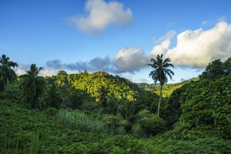 Hiking through the jungle, seychelles 1