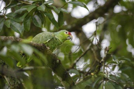 Amazonas
