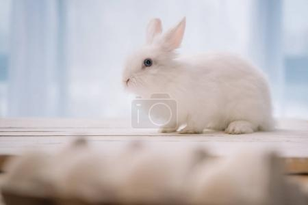 easter rabbit sitting on table with blurred chicken eggs on foreground