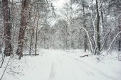 road and trees in snowy forest in winter