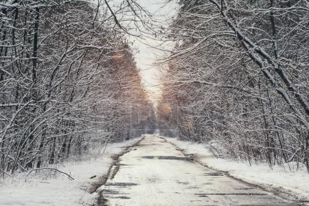 sunlight in snowy park with road in winter