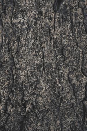 Photo pour Fond d'écorce d'arbre rugueux fissuré - image libre de droit
