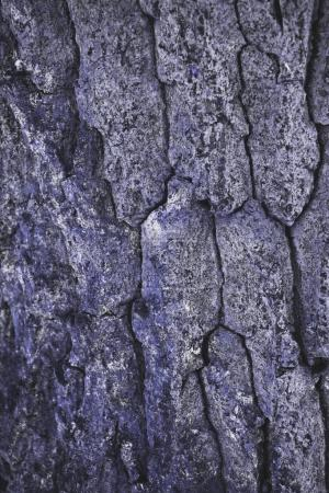 cracked rough purple tree bark background