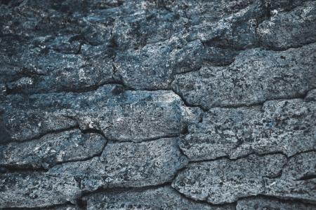 Photo for Cracked rough gray tree bark background - Royalty Free Image