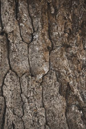 cracked rough brown tree bark background