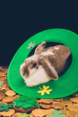 domestic rabbit lying in green hat on golden coins, st patricks day concept