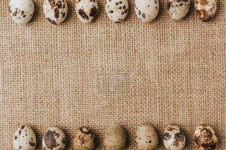 quail eggs laying in a rows on sackcloth