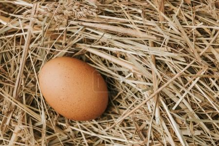 unprocessed brown egg laying on straw
