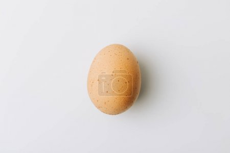brown egg laying on white background