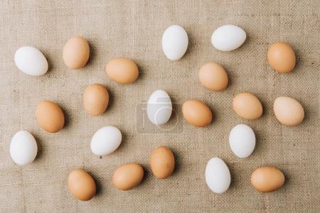 parsemée de œufs blancs et bruns sur un sac