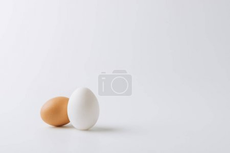 one white and one brown eggs laying on white background