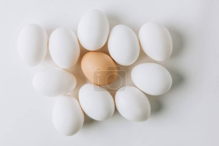 Photo for White eggs and one brown laying on white background - Royalty Free Image