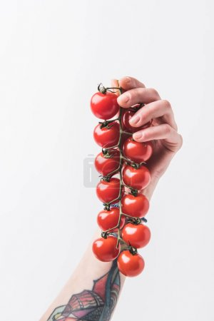 Hand holding branch of cherry tomatoes isolated on white background