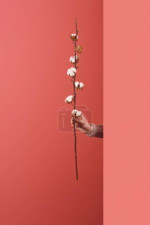 woman sticking out cotton branch behind wall on red