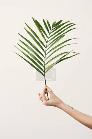 cropped shot of woman holding palm branch isolated on white