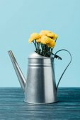 close up view of beautiful yellow chrysanthemum flowers in watering can on wooden tabletop on blue