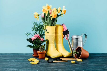 close up view of arranged rubber boots with flowers, flowerpots, gardening tools on wooden tabletop on blue