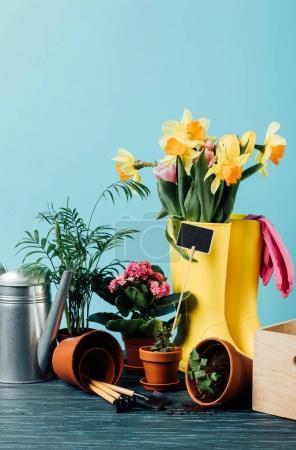 Zobacz kalosze ułożone z kwiatów, doniczki, narzędzia ogrodnicze i konewka na drewnianym blatem na niebieski z bliska