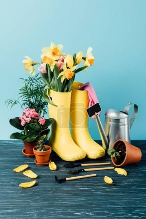 close up view of arranged rubber boots with flowers, flowerpots, gardening tools and watering can on wooden tabletop on blue