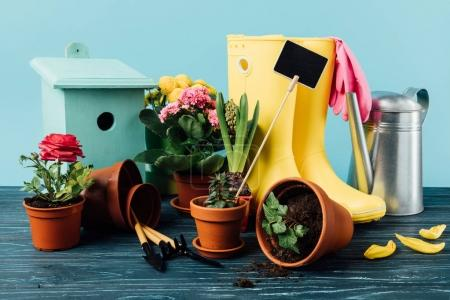 Photo for Close up view of arranged rubber boots with flowers, flowerpots, gardening tools, watering can and birdhouse on wooden tabletop on blue - Royalty Free Image