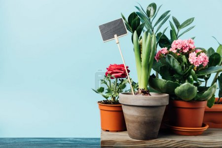 close up view of various plants in flowerpots and empty chalkboard on wooden surface isolated on blue