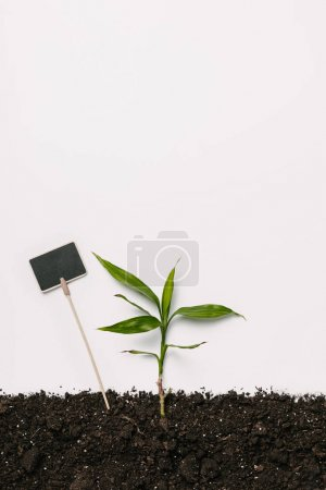 flat lay with green plant and empty blackboard in ground isolated on white
