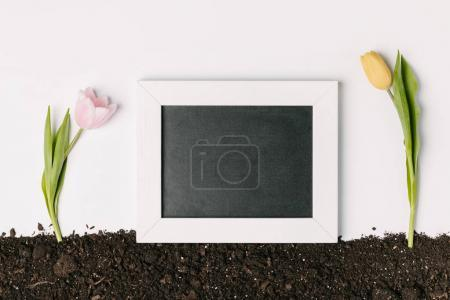 top view of pink and yellow tulips with empty chalkboard on ground isolated on white