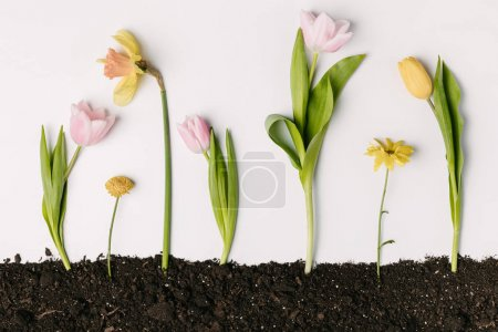 flat lay with various beautiful flowers in ground isolated on white