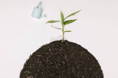 top view of little blue watering can and green plant in ground isolated on white