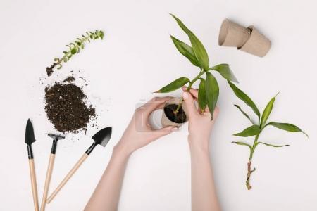 Photo pour Vue partielle de femme plantation plante verte avec les outils de jardinage et de pots de fleurs autour d'isolé sur blanc - image libre de droit