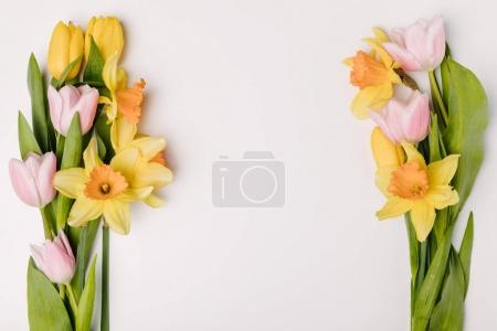 Photo for Flat lay with arranged beautiful tulips and narcissus flowers isolated on white - Royalty Free Image