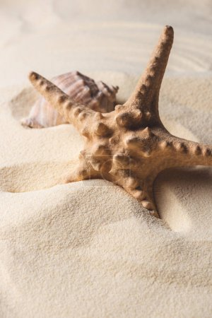 Photo for Summer theme template with starfish and shell on sandy beach - Royalty Free Image