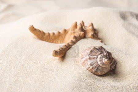 Sea starfish and shell on summer sandy beach