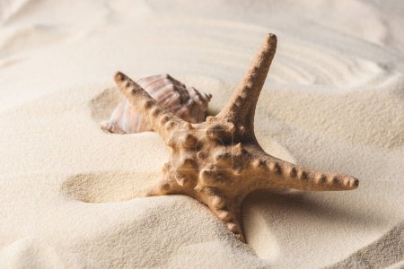 Sea starfish and shell on sandy beach