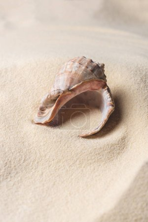Seashell filled with sand on summer beach
