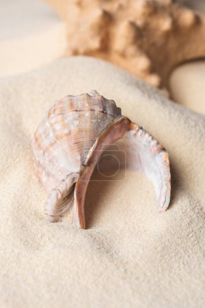 Large seashell filled with sand on beach