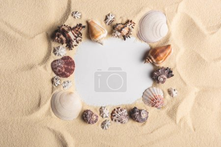 Frame of various seashells on light sand