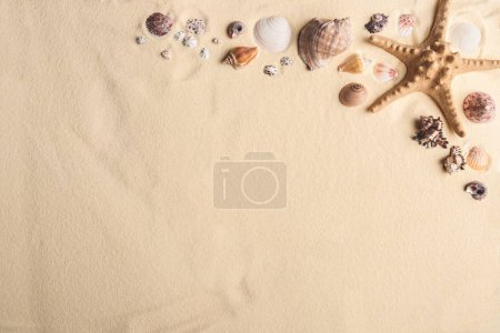 Seashells and starfish border on light sand