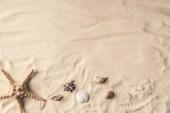 """Постер, картина, фотообои """"Морская звезда и морских раковин на песчаном пляже"""""""