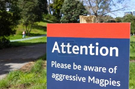 Attention please be aware of aggressive Magpies