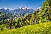 Watzmann mountain peak with blooming meadows in summer, Berchtesgaden, Bavaria, Germany