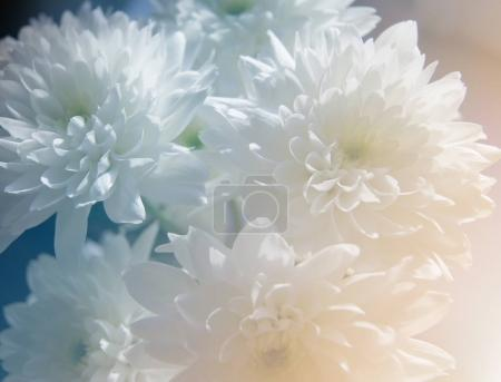 Delicate bouquet of chrysanthemums flowers on a su...